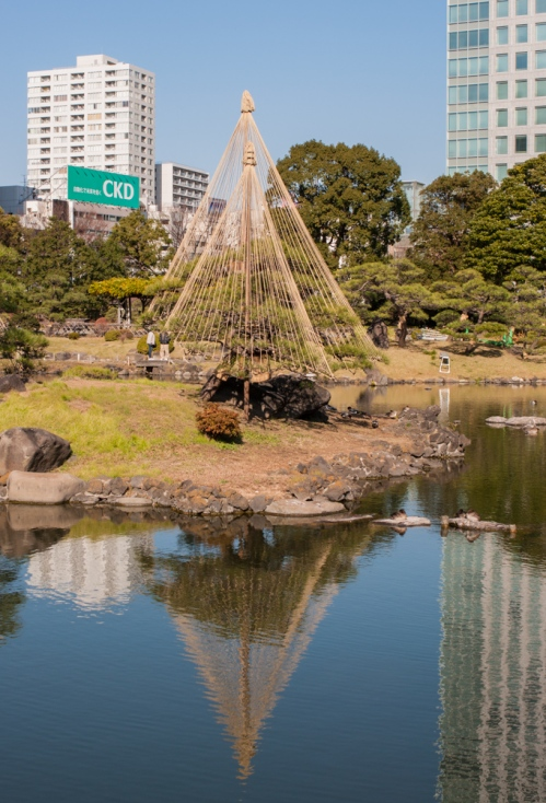 Pine trees with yukizuri ropes to protect the branches from snow in Tokyo's Kyu-Shiba-Rikyu landscape garden.