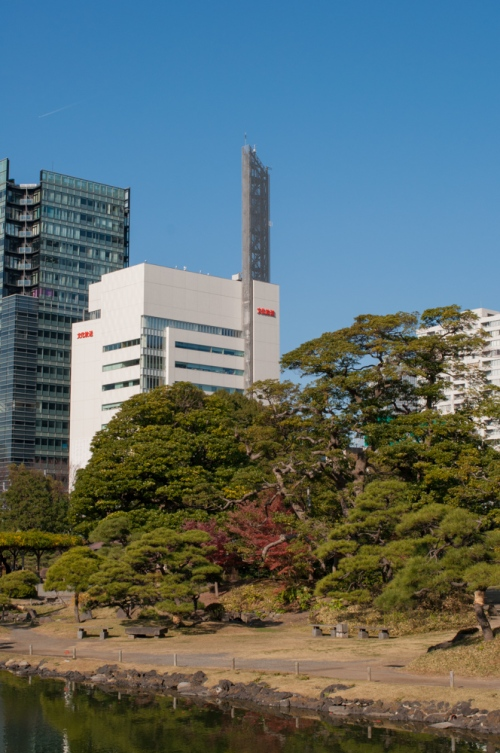 High rises behind a clump of trees in Tokyo's Kyu-Shiba-Rikyu landscape garden.